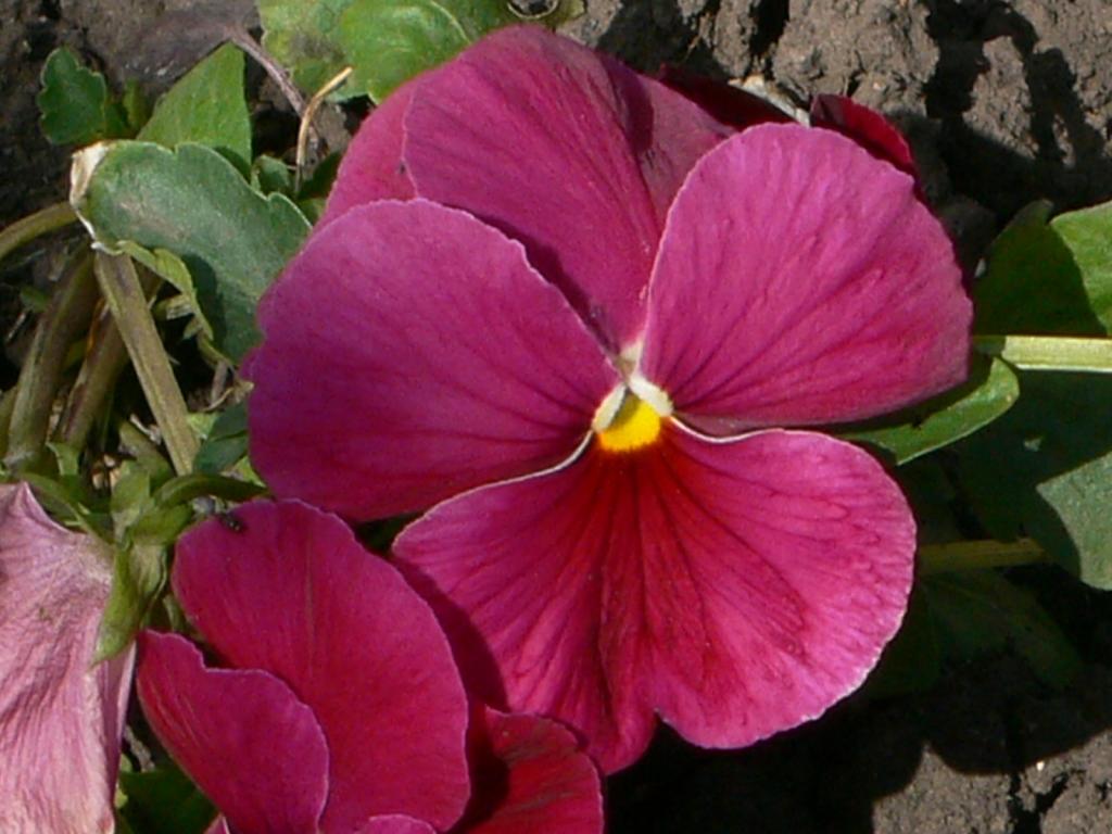 Рукодельки - цветочки