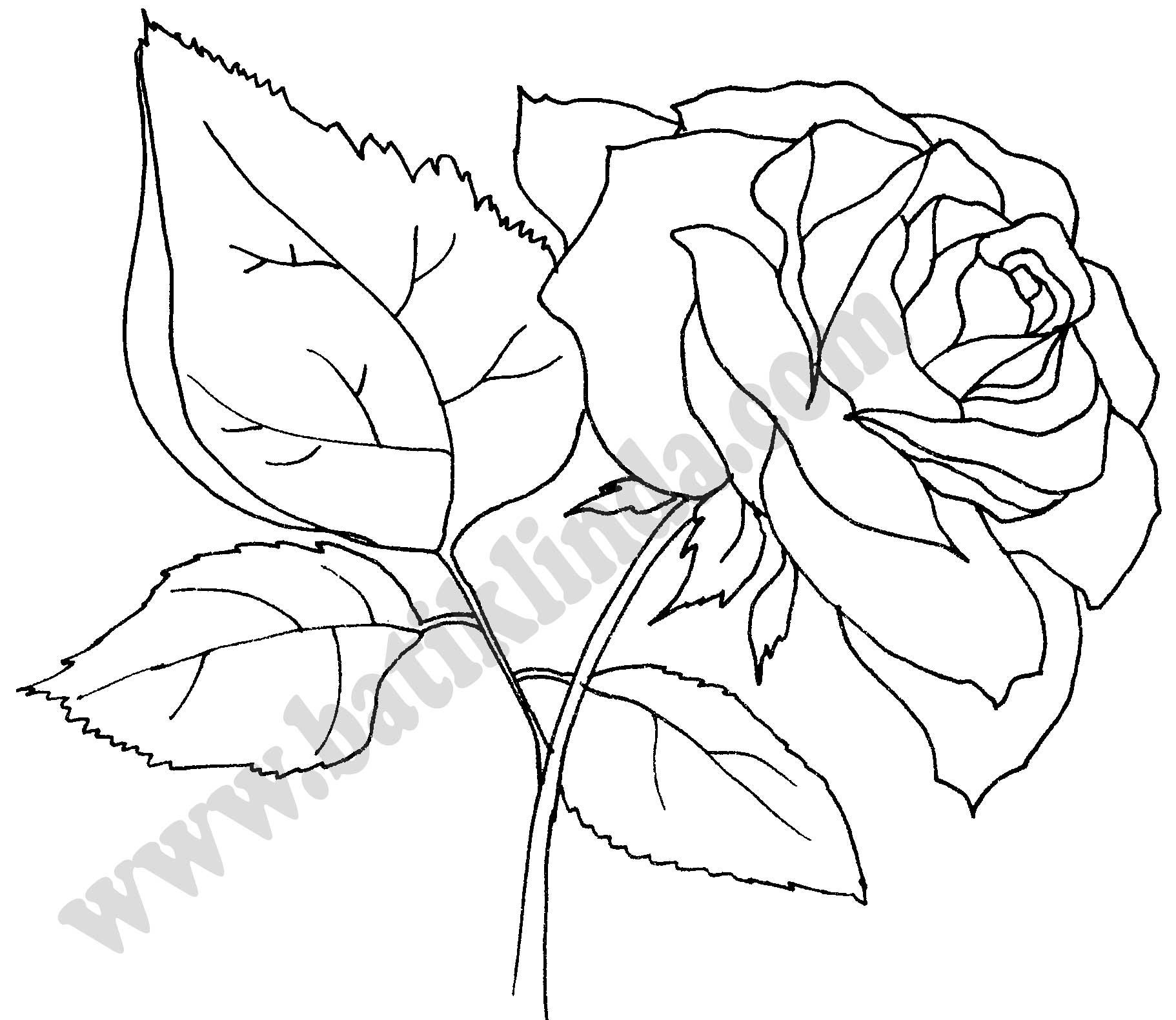 розы батик фото
