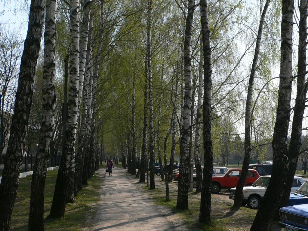 Тропинка по направлению к ЦРБ (центральная районная больница)Локоть